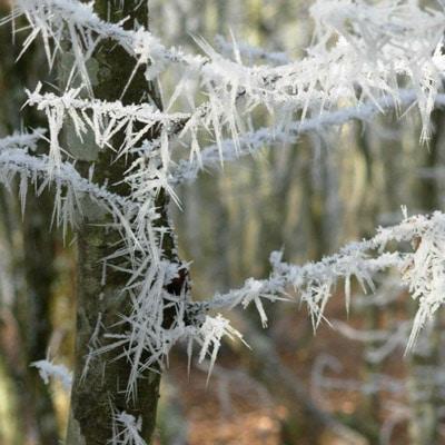 artenreel-diese-1-neige-bois-pauline-menesclou